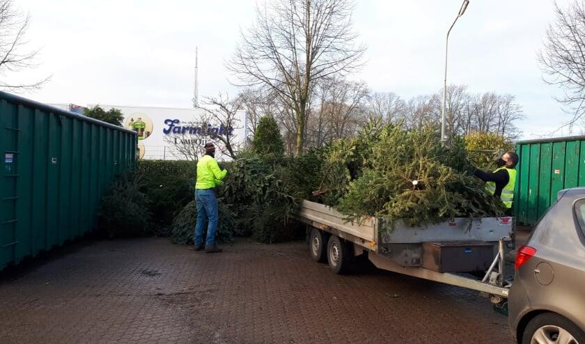 <p>De lossers van de kerstbomen in actie. Foto: Gerben Duenk</p>