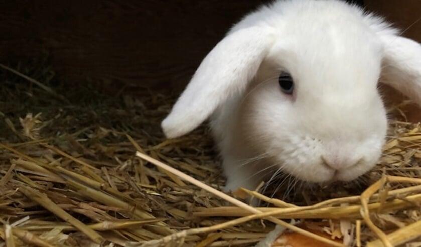 <p>Op de Marishof is dit konijn gevonden. Foto: Amivedi</p>