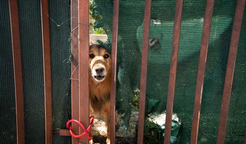 Hond achter hek in Kroatië. Foto: Ton van Vliet