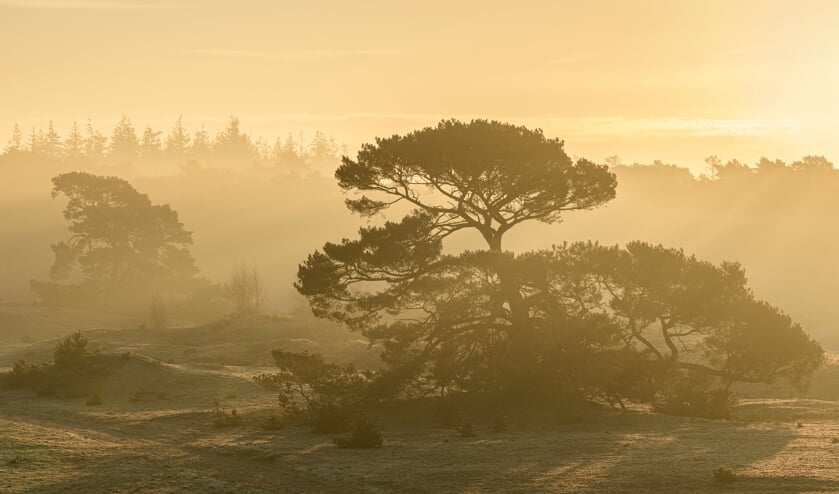 <p>Een vliegden op het Wekeromse Zand tijdens een mistige zonsopkomst. Foto: Jeroen van Wijk&nbsp;</p>