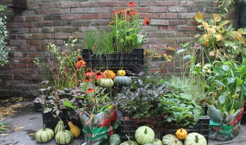 <p>Zaterdagmorgen gaan de keurmeesters van Groei en Bloei Berkelland de winnaars van de &#39;Mooiste tuinen van Ruurlo&#39; persoonlijk langs met een tas vol planten. Foto: PR.&nbsp;</p>