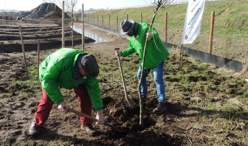 Leo Morren en Jan Lenselink planten de boom. Foto: PR