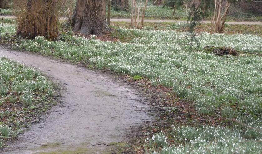 <p>Genieten van velden sneeuwklokjes en winterakonieten. Foto: PR</p>