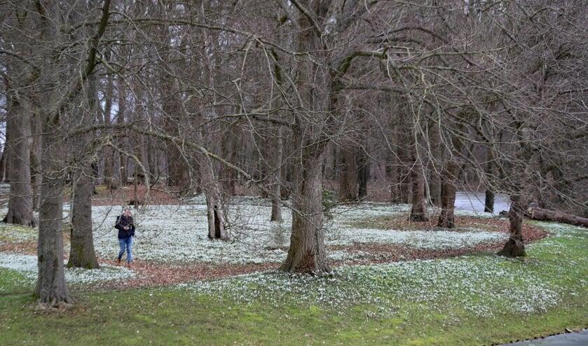 Sneeuwklokjes bij Huize Baak. Foto: Sander Grootendorst