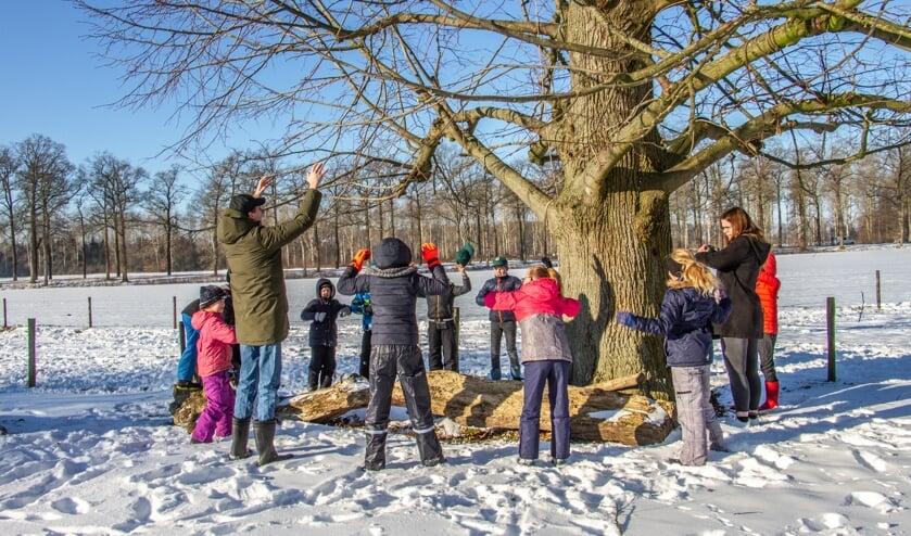 De welpen troffen kou maar zon en openen in de sneeuw rondom de grote boom. Foto: Liesbeth Spaansen