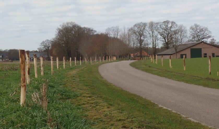 <p>Keurig op zes meter van elkaar staan de palen aan beide zijden van de Herkampweg. Foto: Jan Hendriksen</p>