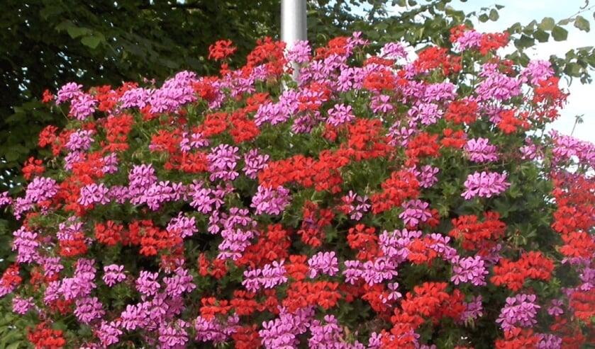 <p>Steenderen krijgt kleur: prachtige bloembakken aan de lantaarnpalen. Foto: PR</p>