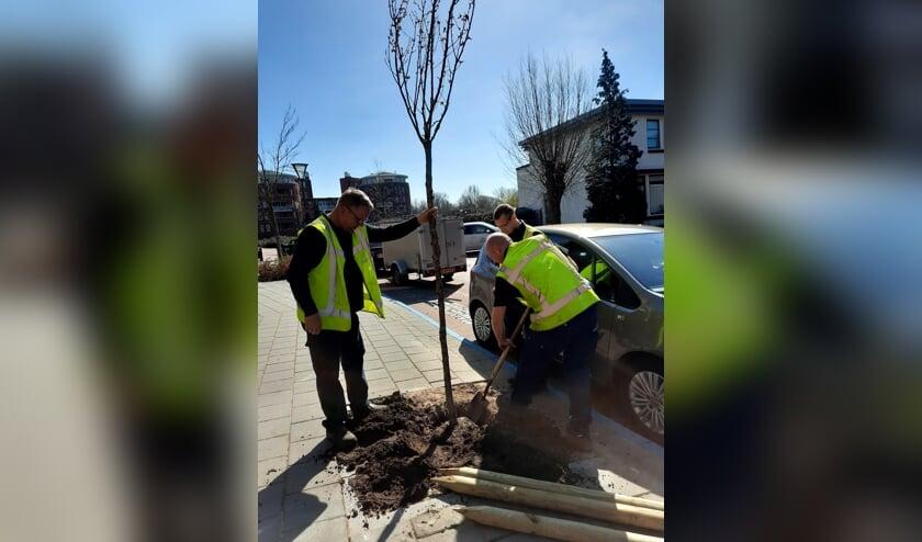 <p>Medewerkers van de gemeente Zutphen planten de eerste boom op het Hoornwerk in Zutphen. Foto: PR</p>