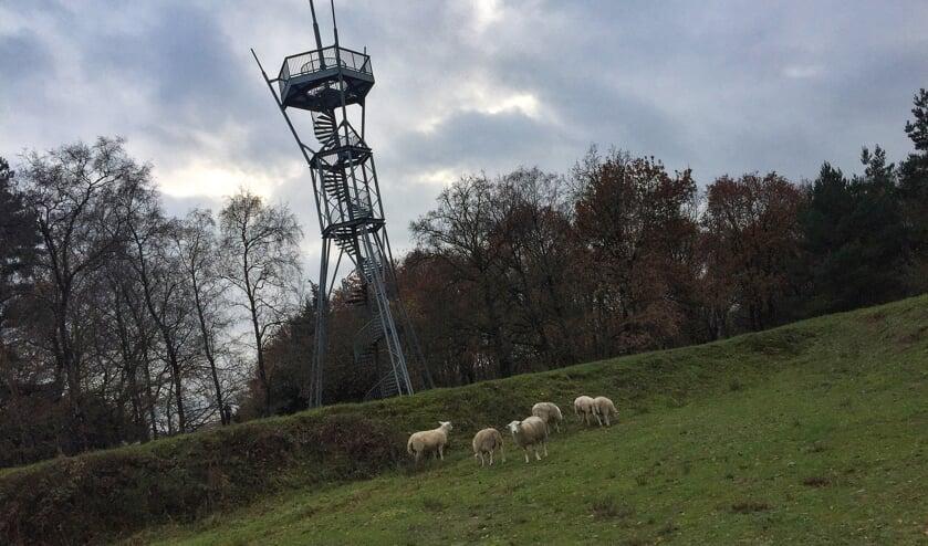 <p>Zolang de schapen grazen in op de Engelse Schans is het gebied voor publiek gesloten. Foto: PR</p>