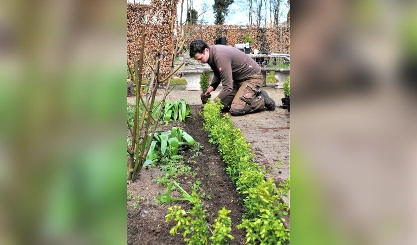 <p>In de tuin aan de Morgenzonweg plant de &#39;Buxus Dokter&#39; de nieuwe buxussoort aan. . Foto: Eigen foto&nbsp;</p>