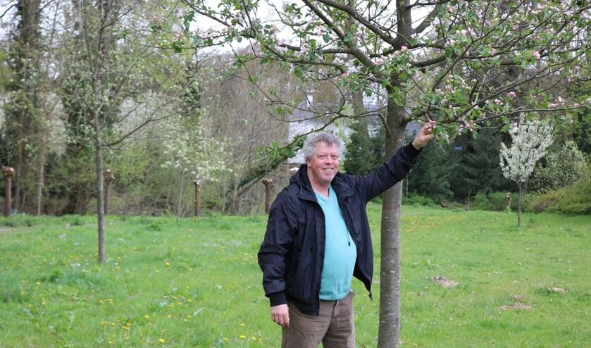 <p>Koos Kempers bij de Juttepeer, link het Sijden Hempje en rechts in bloei, de Kruidenierspeer. Foto: Arjen Dieperink</p>