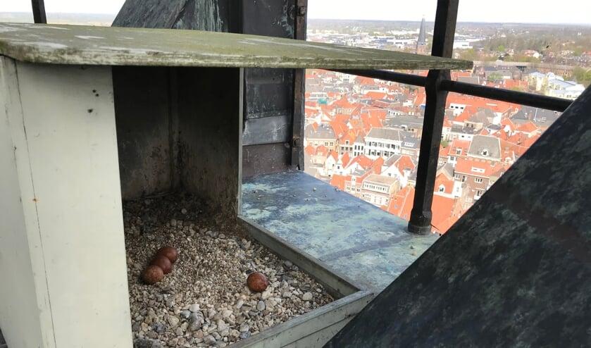 <p>De vier eieren in de nestkast in de toren van de Walburgiskerk kunnen elk moment uitkomen. De situatie is te precair om op 4 en 5 mei te vlaggen. Foto: Arjen Becht</p>