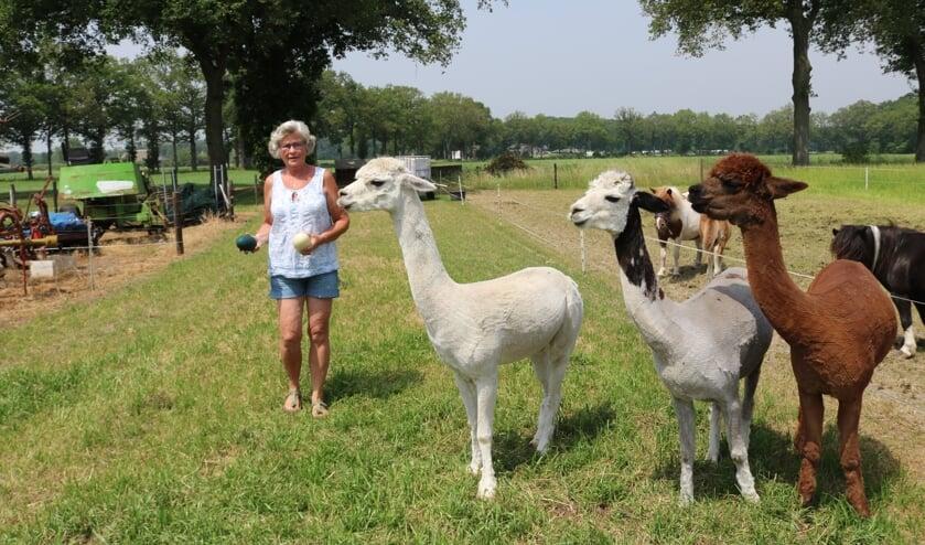 <p>Gerry Langeler bij de alpaca&#39;s met in haar handen de eieren van de emoe en de nandoe. Foto: Arjen Dieperink</p>