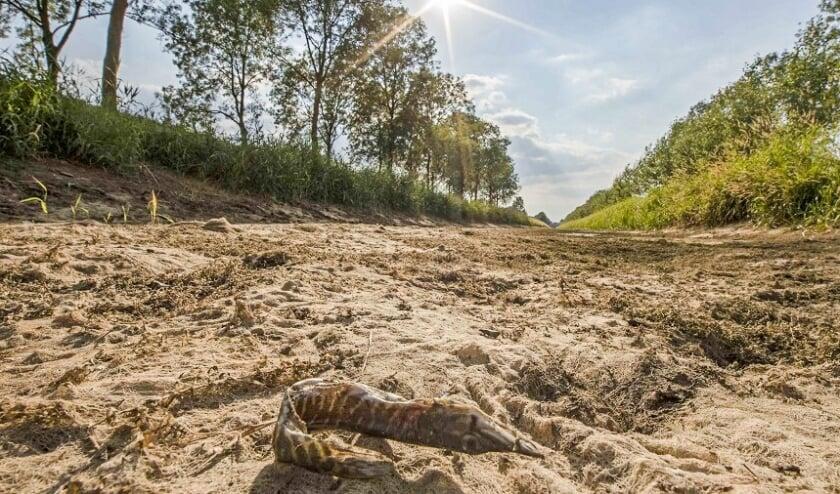 De drooggevallen Bielheimerbeek in de Achterhoek in de zomer van 2018. Foto: Waterschap Rijn en IJssel