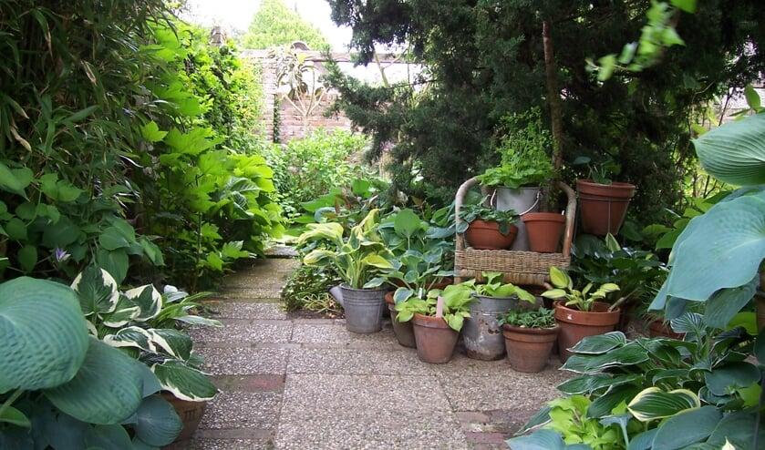<p>De tuin Hof te Ruurlo is elfhonderd vierkante meter en ingedeeld door muurtjes en taxushagen en heeft diverse aparte doorkijkjes en hoekjes, daarom is het telkens weer verrassend. Foto: PR&nbsp;</p>