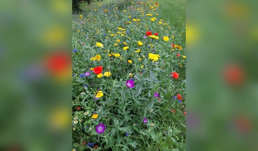 De zaaiactie 'wilde bloemen- en akkerrandzaad' van de Werkgroep Buitengebied Halle leverde mooie beelden op. Foto: Erna Vink