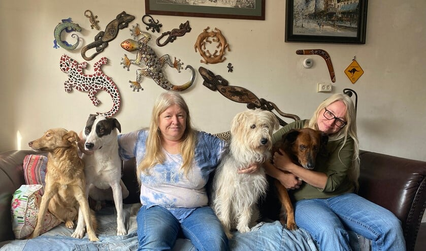 <p>Hope, Freya, Andrea, Jazzie, Banshee en Susie. Ze passen precies met z'n zessen op de bank. Foto: Karin van der Velden</p>