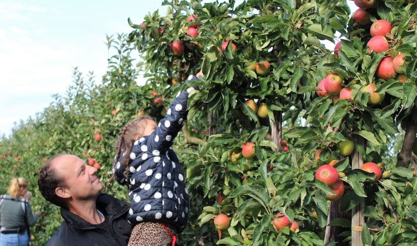 <p>Een vader tilt zijn dochter hoog op om een mooie appel te plukken. Foto: Fruitboerderij Horstink</p>
