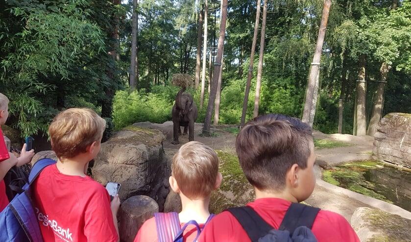 In Burgers' Zoo was een van de 'zekerheidjes' een kijkje bij de indrukwekkende olifant. Foto: PR