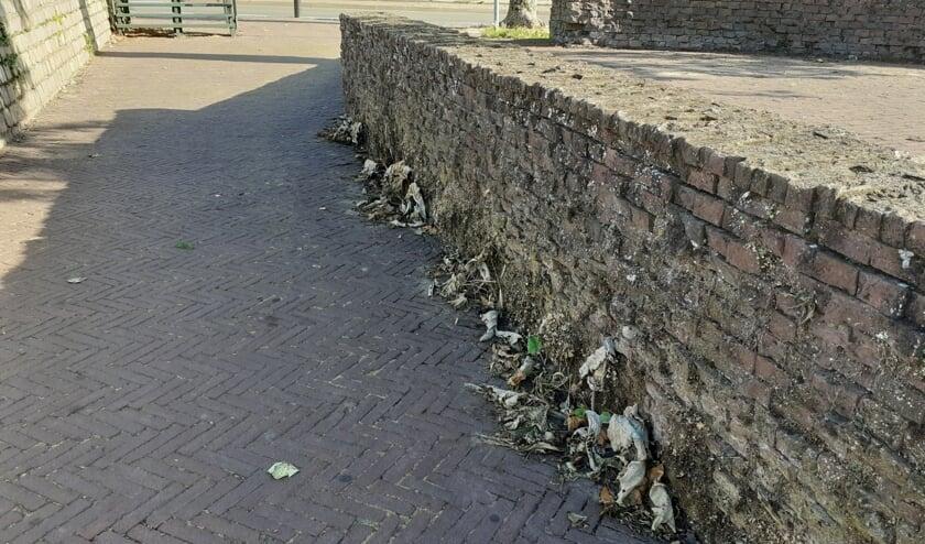 <p>Verschroeide zeldzame muurplanten op het Vispoortplein. Foto: Alize Hillebrink</p>