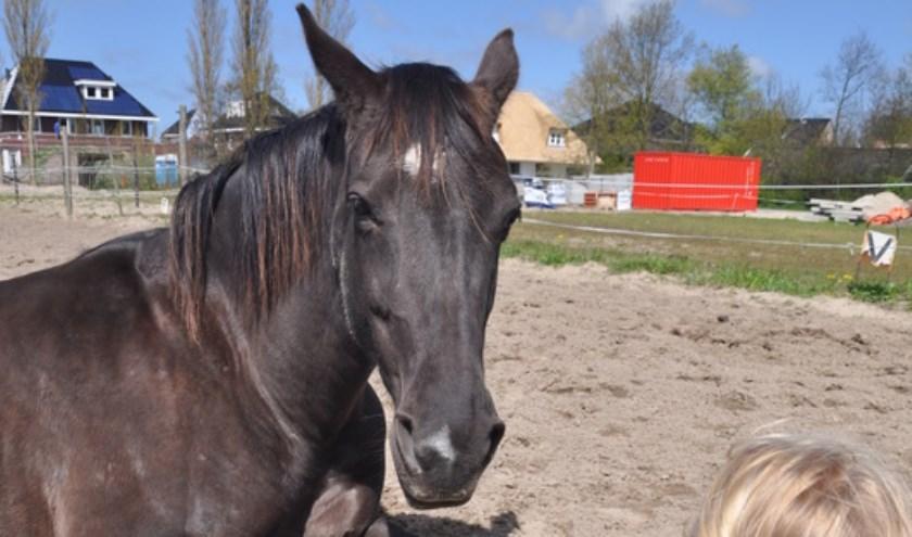 Woensdag 19 oktober: lezing over paarden