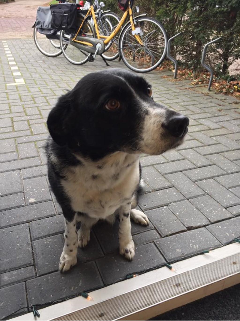 Deze hond zat voor Bijwaard Kappers voor de deur.  © Uitkijkpost Media B.v.