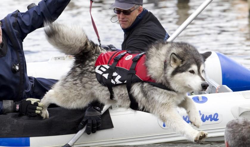 Demonstratie reddingzwemmende honden
