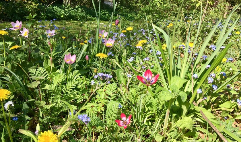 Het bloemenlint op Landgoed Willibrordus lag er in het voorjaar prachtig bij.