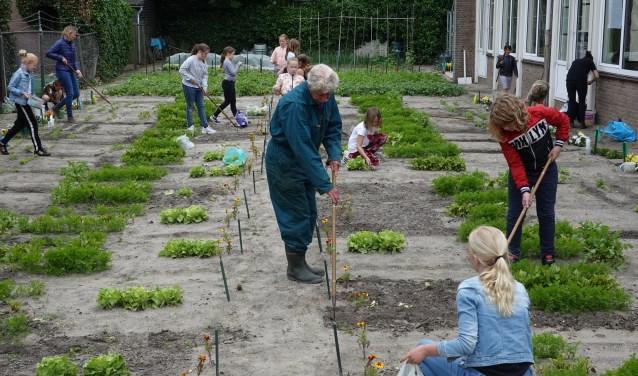 Meester Wim en de leerlingen aan het werk in de schooltuin.
