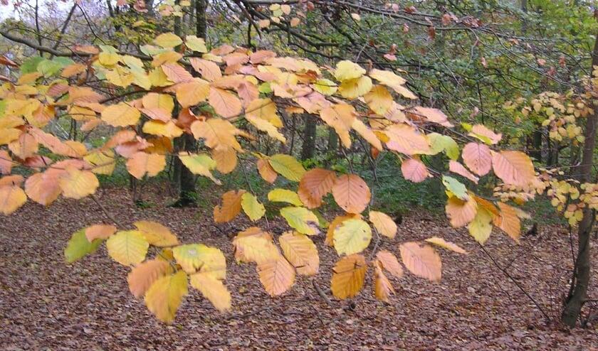 Ga mee op een herfstwandeling met de IVN-natuurgids.