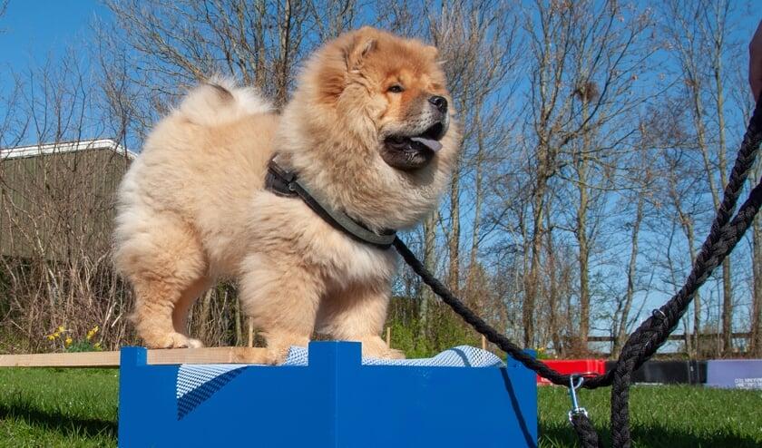 Tijdens de Dag van de Hond ziet u allerlei rassen en demonstraties behendigheid, hoopers en fun.