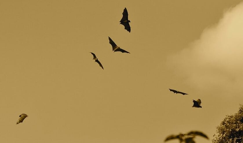 Een mooie kans om meer te weten te komen over vleermuizen en de nachtbrakers te zien en te horen!