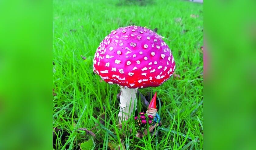 <p>Onder een grote paddenstoel, rood met witte stippen, zat kabouter Spillebeen. Heb jij deze mooie paddenstoel met de kabouter eronder ook al gespot?</p>