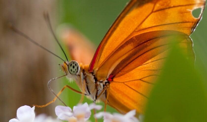 <p>Vlinder</p>