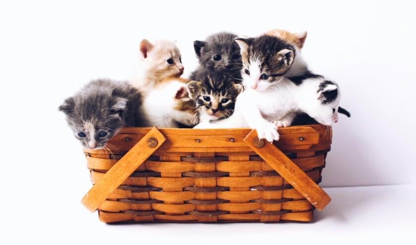 Regiogemeenten starten onderzoek naar toekomstbestendige dierenopvang en -vervoer, een mandje is natuurlijk niet optimaal.