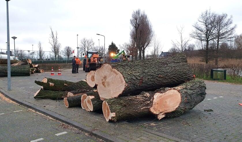 <p>Bomen moeten wijken voor nieuwe beschoeiing.</p>