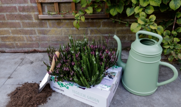 Ruilactie: één tuintegel voor een mooie plant!