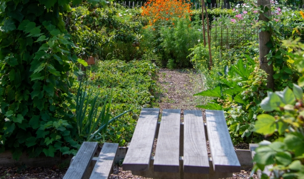 <p>Bij goed weer wordt de burenlunch geoogst, bereid en genuttigd in de fruittuin.&nbsp;</p>