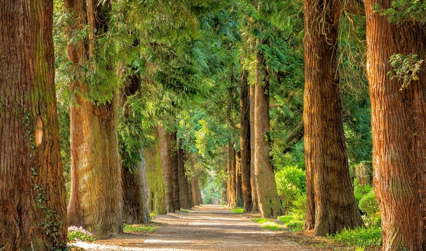 De wandelingen gaan richting bos, hei en/of akkers.