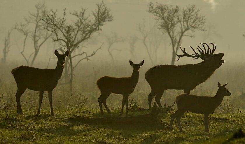 De meeste hertenfoto's in zijn collectie maakte Frank de Winter in de Oostvaardersplassen.