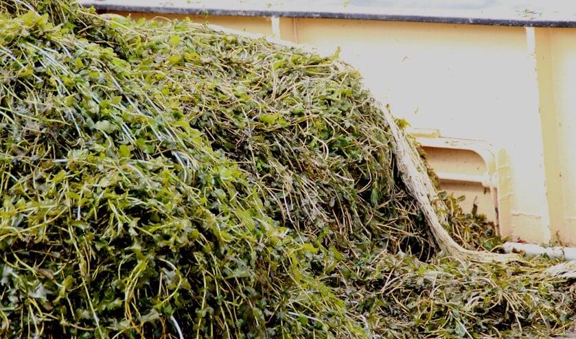 Er gaat extra gemaaid worden tegen de overlast van waterplanten in het Gooimeer.
