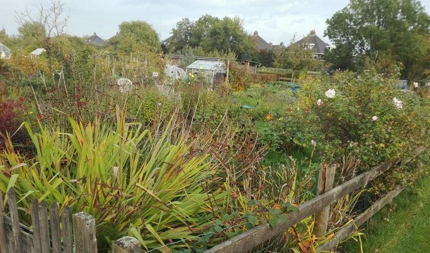 Een van de twee tuinen die beschikbaar is.