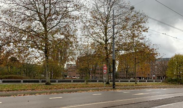 <p>Bomen aan de Hartveldseweg zijn gekapt voor werk Oost-West As.</p>