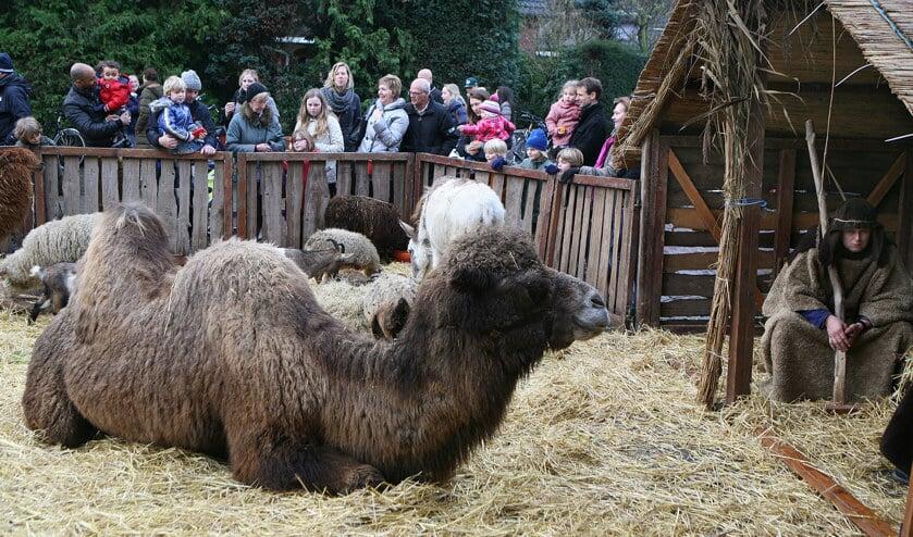 Levende kerststal trekt altijd veel publiek.