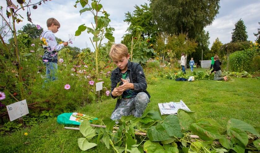 Duizenden kinderen in de basisschoolleeftijd hebben een tuintje gehad.