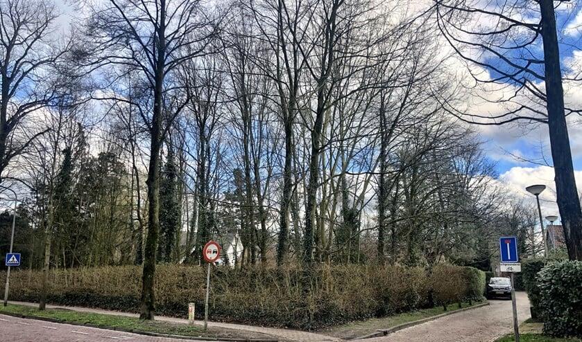 Het stukje gemeentegrond tegenover de speelplaats van basisschool St. Jan-De Binckhorst.
