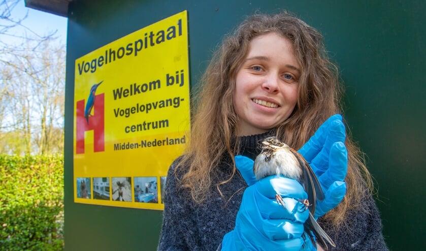 Medewerkers van het vogelhospitaal kunnen weer doen wat zij maanden niet meer konden.