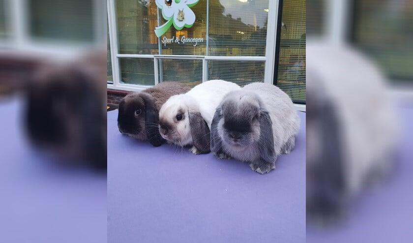 Trio's konijnen werden gekeurd door keurmeester Kok.