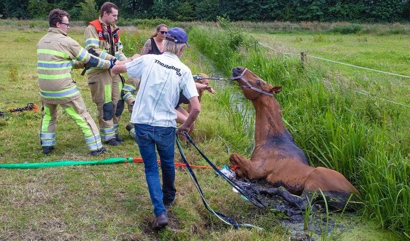 De brandweer helpt het paard uit de sloot te halen.