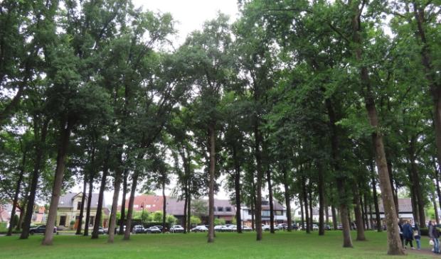 <p>De rust rond de bomenkap op de Brink lijkt teruggekeerd, maar voor hoelang? (Foto: Carin van den Berg)</p>